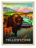 KC NP Yellowstone Bison
