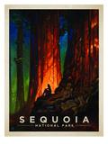 KC NP Sequoia