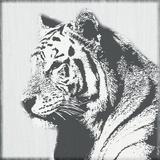 Tiger - Tenacity