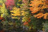 Autumn Trees  Sheepscot River  Palermo  Maine  USA