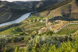 Douro Valley  Douro River  Porto Valley Is Lined with Steeply Sloping Hills and Vineyards