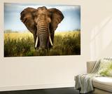 Encounters in Serengeti
