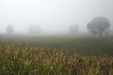Fog and Farmland Near Hamilton  Waikato  North Island  New Zealand