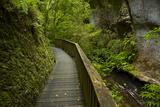 And Mangapohue Stream  Waikato  North Island  New Zealand