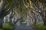 Beech Tree-Lined Road known as the Dark Hedges Near Stanocum  County Antrim  Northern Ireland  Uk