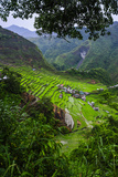 Batad Rice Terraces  Banaue  Luzon  Philippines
