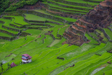 Batad Rice Terraces  World Heritage Site  Banaue  Luzon  Philippines
