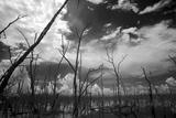 USA  Florida  Dead Mangroves