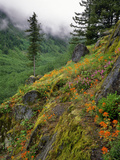 USA  Oregon  Mt Hood National Forest Hillside Landscape in Fog