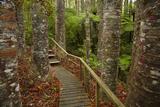 Parry Kauri Park  Auckland Region  North Island  New Zealand