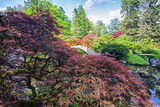 Seattle  Kubota Gardens  Spring Flowers and Japanese Maple with Moon Bridge in Reflection