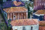 Portugal  Porto  Homes by the Funicular of Vila Nova De Gaia with Purple Morning Glory Growing