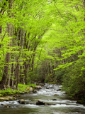 USA  North Carolina  Great Smoky Mountains National Park  Straight Fork Flows Through Forest