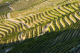 Portugal  Terraced Vineyards Lining the Hills of the Douro Valley