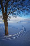 USA  Idaho  Lone Snow Covered Tree with Track Leading Away