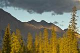 Sunset  from Kicking Horse River  Canadian Rockies  Yoho National Park  British Columbia  Canada