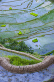 Rice Terraces of Banaue  Northern Luzon  Philippines