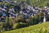 Germany  Baden-Wurttemburg  Stuttgart-Uhlbach  Vineyards Above Unter-Turkheim in Fall
