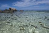 Indian Ocean  Seychelles  Mahe  St Anne Marine National Park  Moyenne Island