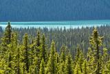 Hector Lake  Banff National Park  Alberta  Canada