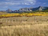 USA  Colorado  San Juan Mountains  Uncompahgre National Forest