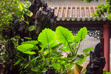 Taro Plant  Foshan Ancestral Temple  Foshan  China