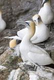Scotland  Shetland Islands