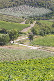 Italy  Radda Vineyards and Olive Groves