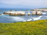 USA  California  Los Osos Point Buchon Trail  Montana De Oro Wildflowers and Sea Stacks