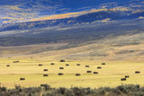 Hay Fields Outside of Steamboat Springs  Colorado