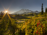 Starburst Setting Sun  Subalpine Wildflowers and Mt Rainier at Mazama Ridge  Paradise Area
