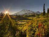 Starburst Setting Sun, Subalpine Wildflowers and Mt. Rainier at Mazama Ridge, Paradise Area Papier Photo par Gary Luhm