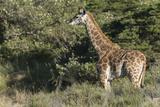 South Africa  Eastern Cape  East London Inkwenkwezi Game Reserve