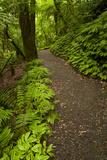 Track to Mangapohue Natural Bridge  Waitomo District  Waikato  North Island  New Zealand