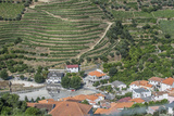 Portugal  Douro Valley  Hillside Vineyard