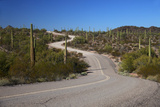 USA  Arizona  Organ Pipe Cactus National Monument Highway 85