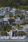 Oriental Bay  Wellington  North Island  New Zealand