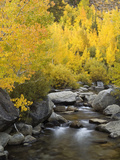 USA  California  Eastern Sierra Bishop Creek During Autumn