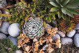 USA  Massachusetts  Cape Ann  Gloucester  Fall Plantings