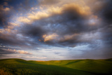 Washington  Palouse County  Rolling Hills of Green Spring Wheat and Evening Bright Clouds