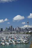 Westhaven Marina  and Sky Tower  Auckland  North Island  New Zealand