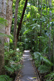 The Rainforest Boardwalk Connecting Centenary Lakes to the Botanic Gardens in Cairns  Queensland
