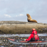 Washington  Woman Sea Kayaker  with Bull Stellar Sea Lion on Offshore Rock Near Tatoosh Island