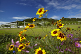 Wildflowers and Ascension Wine Estate  Matakana  North Auckland  North Island  New Zealand