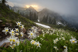 Washington  Mt Rainier National Park