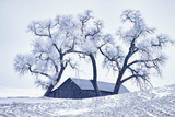 Washington  Palouse  Snow Covered Barn with Old Oak Tree