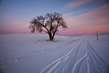 Washington  Sunset Bathed Lone Tree in Snow Covered Winter Field