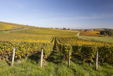 Autumn Color in the Vineyards of Sancerre  Cher  Centre  France  Europe