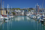 Yachts at Chaffers Marina and Cbd  Wellington  North Island  New Zealand