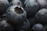 USA  Oregon  Keizer  Blueberries